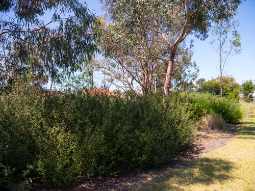 Bain reserve community planting